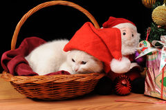 White cat playing with a Santa Claus Royalty Free Stock Photo