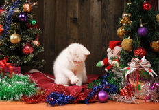 White cat playing with a Santa Claus Royalty Free Stock Images