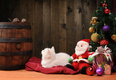 White cat playing with a Santa Claus Royalty Free Stock Image