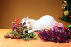 White cat plays with a mouse Royalty Free Stock Photos