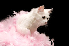 White cat plays pink feathers Stock Photo
