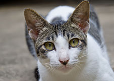 White cat portrait. Close up lonely face of stray cat portrait Royalty Free Stock Photography