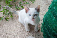 White cat portrait Stock Photography