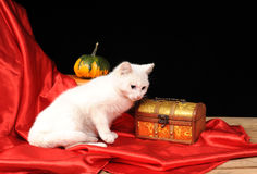 White cat posing for on the table Royalty Free Stock Photo