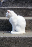 White cat profile Royalty Free Stock Images