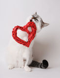 White cat in red bow tie nibbles valentine heart. White cat with blue eyes in red bow tie nibbles decorative heart Stock Photo