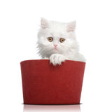 White cat red cap. Isolated white cat in a red cap Royalty Free Stock Photos