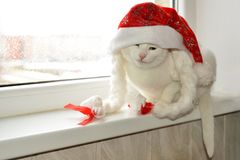 White cat with red hat Stock Image