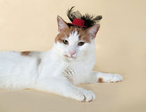 White cat with red spots in the red hat lying on yellow Royalty Free Stock Image