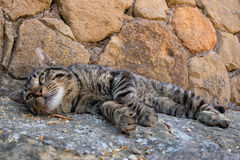White cat relaxing in rome old stones Royalty Free Stock Photo
