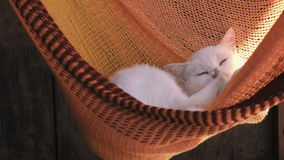 White cat rest is basking in an orange hammock. Cat washes. White cat rest is basking in an orange hammock. The sun`s rays fall on the wool. Cat washes stock footage