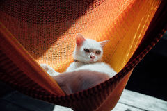 White cat rest is basking in an orange hammock. Royalty Free Stock Images