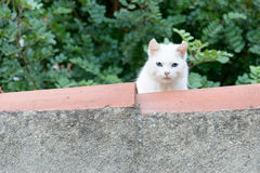 White Cat on Roof Stock Photo