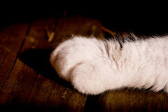White Cat's Paw On Wood Royalty Free Stock Images