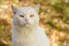 White cat from a shelter Stock Images