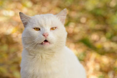White cat from a shelter Royalty Free Stock Image