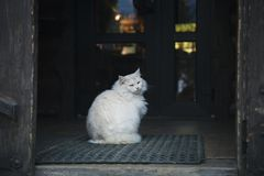 White cat sits on the doorstep royalty free stock photo
