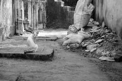 A white cat  sits among the ruins in the slums. A white cat with a striped tail and spot on the head sits among the ruins in the slums Stock Photos