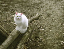 White cat is sitting Royalty Free Stock Photos