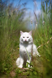 White cat sitting. In high green grass Royalty Free Stock Photo