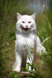 White cat sitting. In high green grass Stock Photos