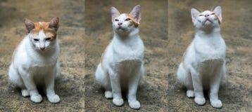 White cat sitting on floor Stock Image