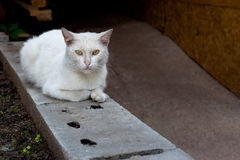 White cat. A white cat sitting on grey block Stock Photo