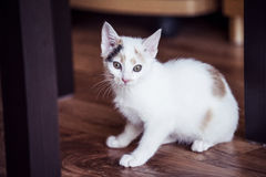 White cat sitting at home on the floor. White small cat sitting at home on the floor Stock Photo