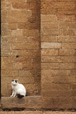 White cat sitting near the wall.  royalty free stock photo