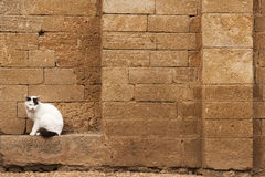 White cat sitting near the wall.  stock image