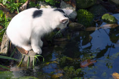 Cat by the water Royalty Free Stock Photography