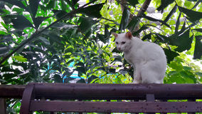 White cat sitting quietly on wooden rail in the garden Stock Images