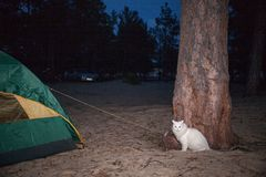 White cat sitting in a tree at night. Royalty Free Stock Photography