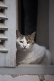 White cat sitting in wooden window and watching. White young cat sitting in wooden window and watching stock photos