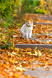 White cat sitting on a yellow leaves Stock Images