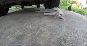 White Cat stock video