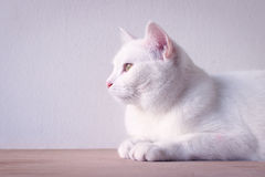 White cat sleep on table. White cat sleep on table and white background Royalty Free Stock Image