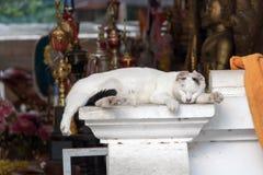 The white cat sleep on the terrace. In the buddhist monastery, Chinag Mai, Thailand Stock Photo
