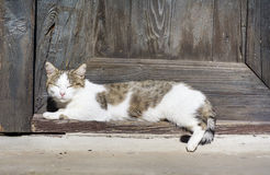 White Cat  sleeping in front of the door  and sunbathing Royalty Free Stock Images