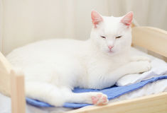 White cat sleeping Stock Images