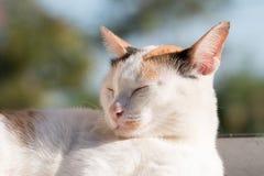 White cat sleeping Stock Photo