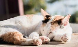 White cat sleeping Royalty Free Stock Photos