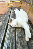 White cat sleeping on a park bench Royalty Free Stock Photos