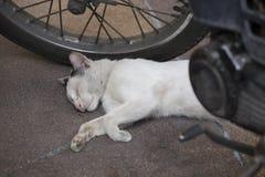 White cat sleeping on the road stock photos