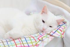 White cat sleeping. royalty free stock photos