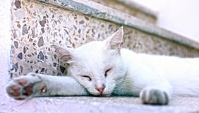 White cat sleeping Stock Photos