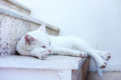 White cat sleeping Stock Photography