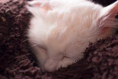 White cat. Sleeping. Turkish angora. Beautiful Turkish angora. Sweet sleeping Stock Photos