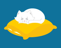 White Cat sleeps on pillow. Sleeping kitten pet Stock Photo