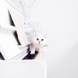 White cat slinks on the piano keys Stock Image